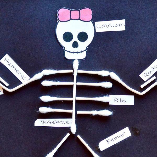 Q Tip Skeletal System First Grade Ideas Skeletal System