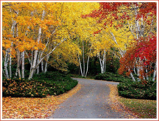 544ca6ef4e5b39987e22fe61e03b8f36 - Hidden Lake Gardens In Tipton Michigan