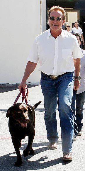 Stars And Their Pets Julianne S Stowaways With Images Celebrity Dogs Famous Dogs Arnold Schwarzenegger
