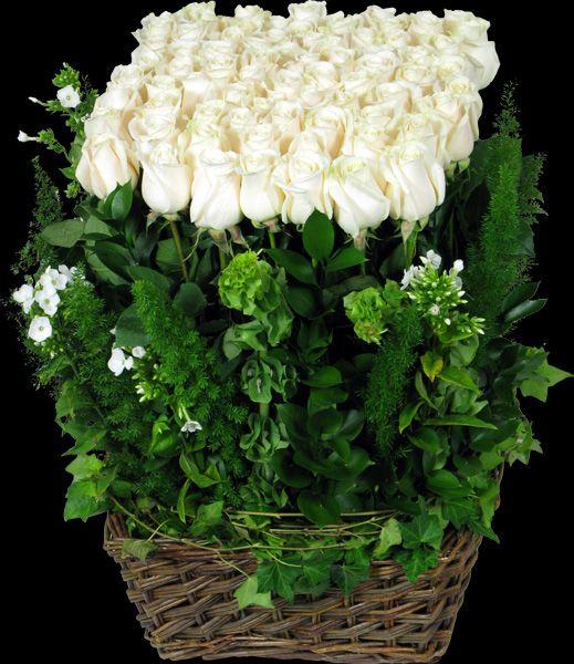 White Rose Hedge Rose Hedge Winston Flowers White Roses