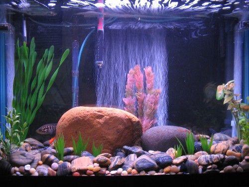 Aquarium With River Rock Fresh Water Fish Tank Fish Tank