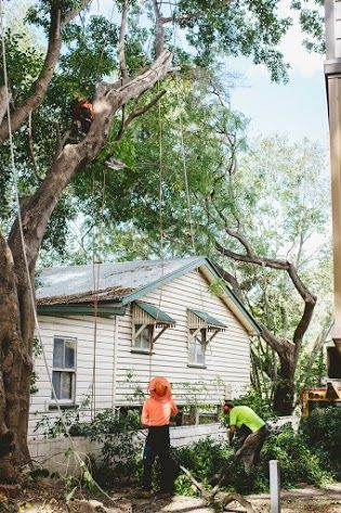 Tree Cabling Bracing Services In Georgia Tree Service Removal