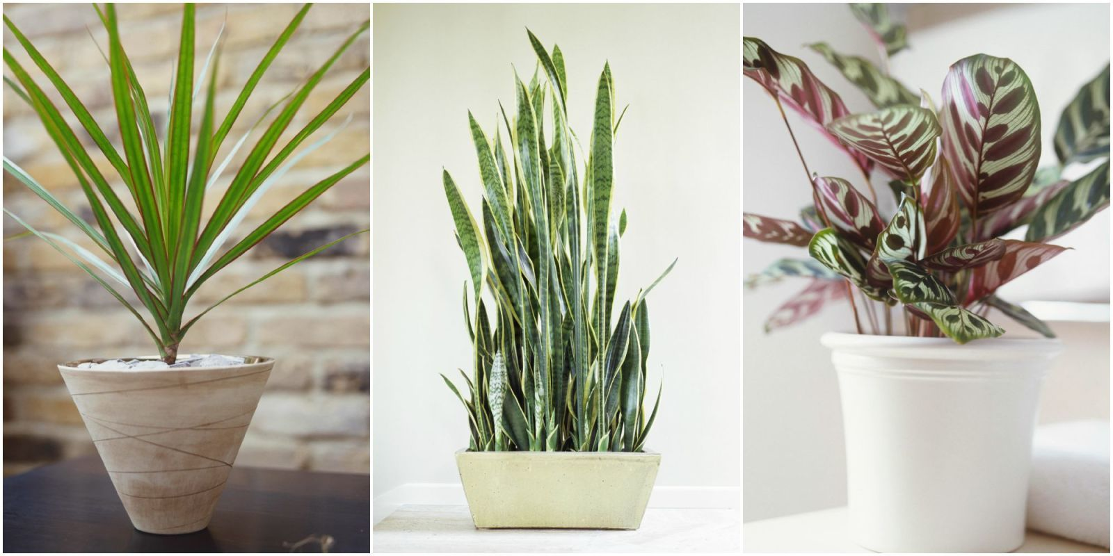 10 houseplants that can survive in even the darkest corner - Tall House Plants Low Light