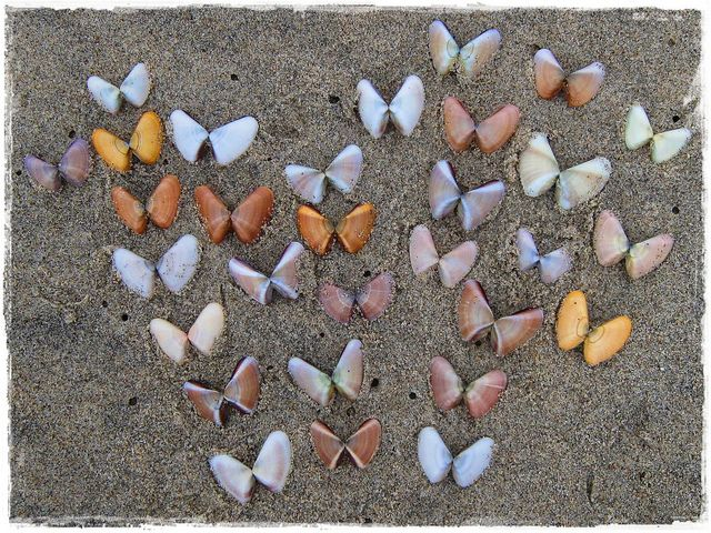 La Mision Beach Combing Butterfly Findings Baja California Beach Combing Shell Crafts Shell Art