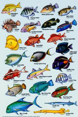 Types Of Fish Google Search First Projecct