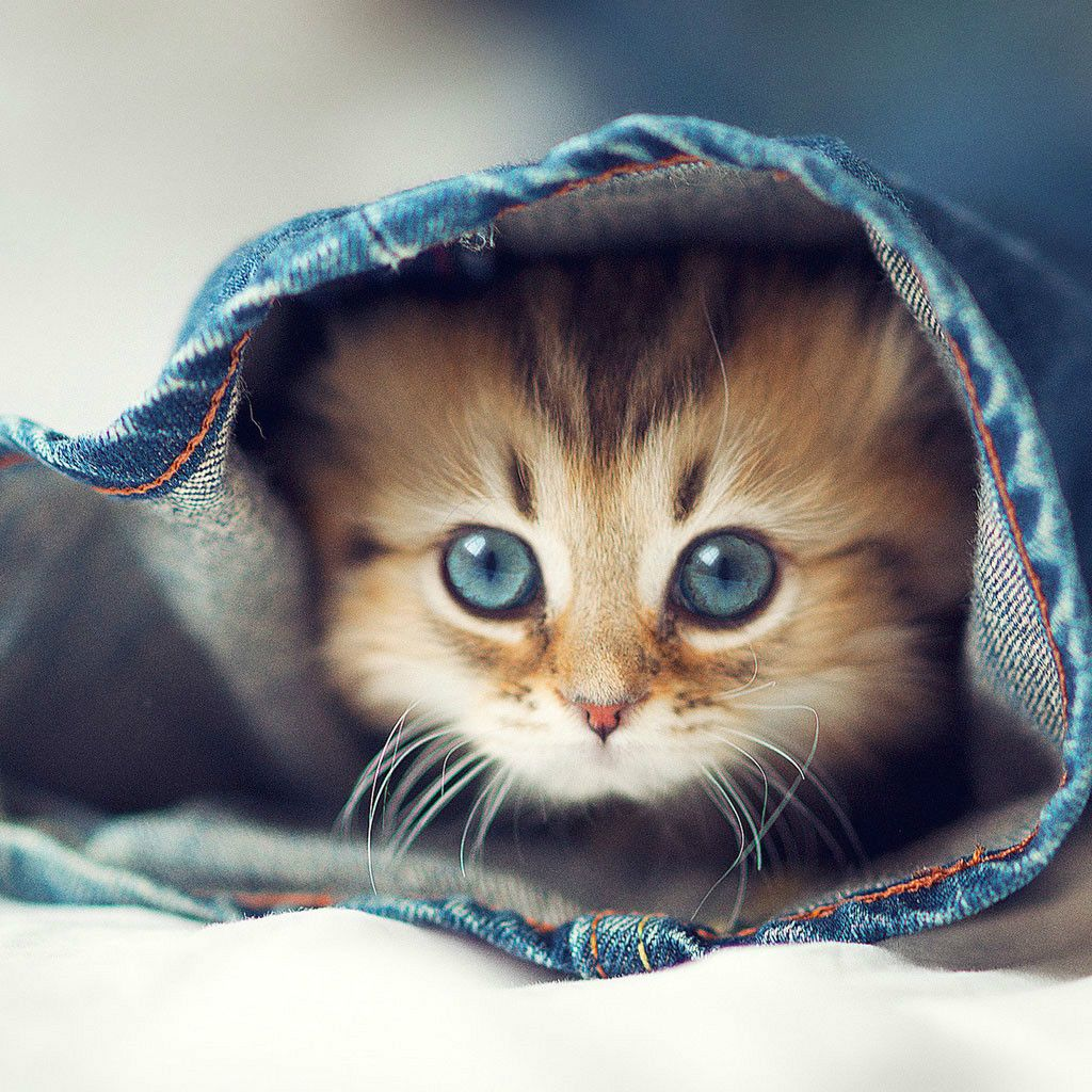 Too Cute To Caption Kittens Cutest Cute Animals Feeding Kittens
