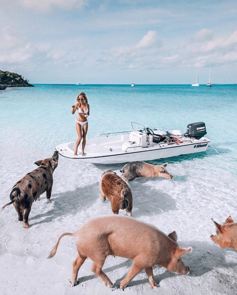 Pig Beach Major Cay Island Bahamas