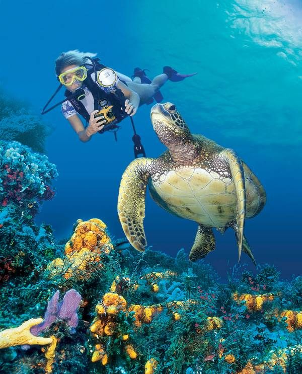 Ninja Turtle Wallpaper Collection 1024×768 Turtle Wallpaper - marine biologist job description