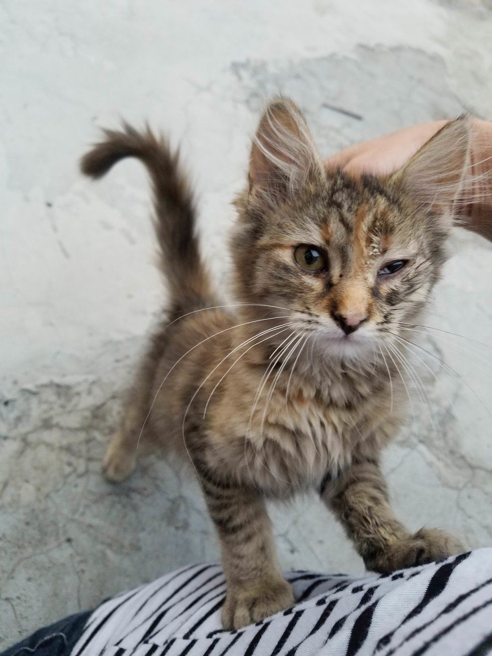 Kitten Found Under Street Lamp Stops Crying And Starts Purring When She Finds Someone To Love Kittens Baby Animals Funny Cats
