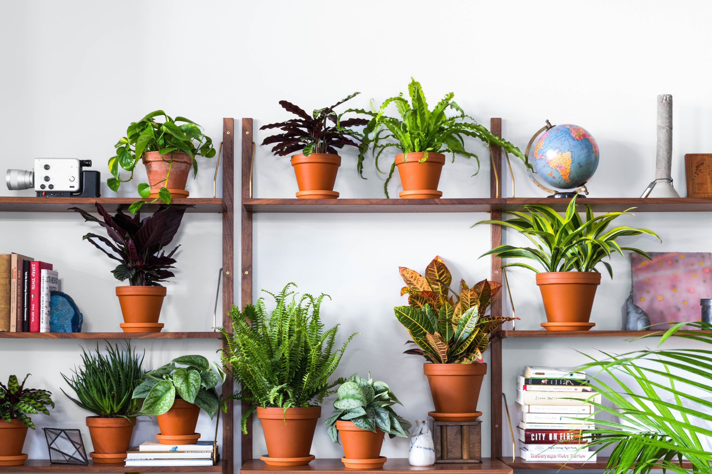 Where To Buy Indoor Plants Online Where To Buy Plants Online Home Design Plants Buy Plants