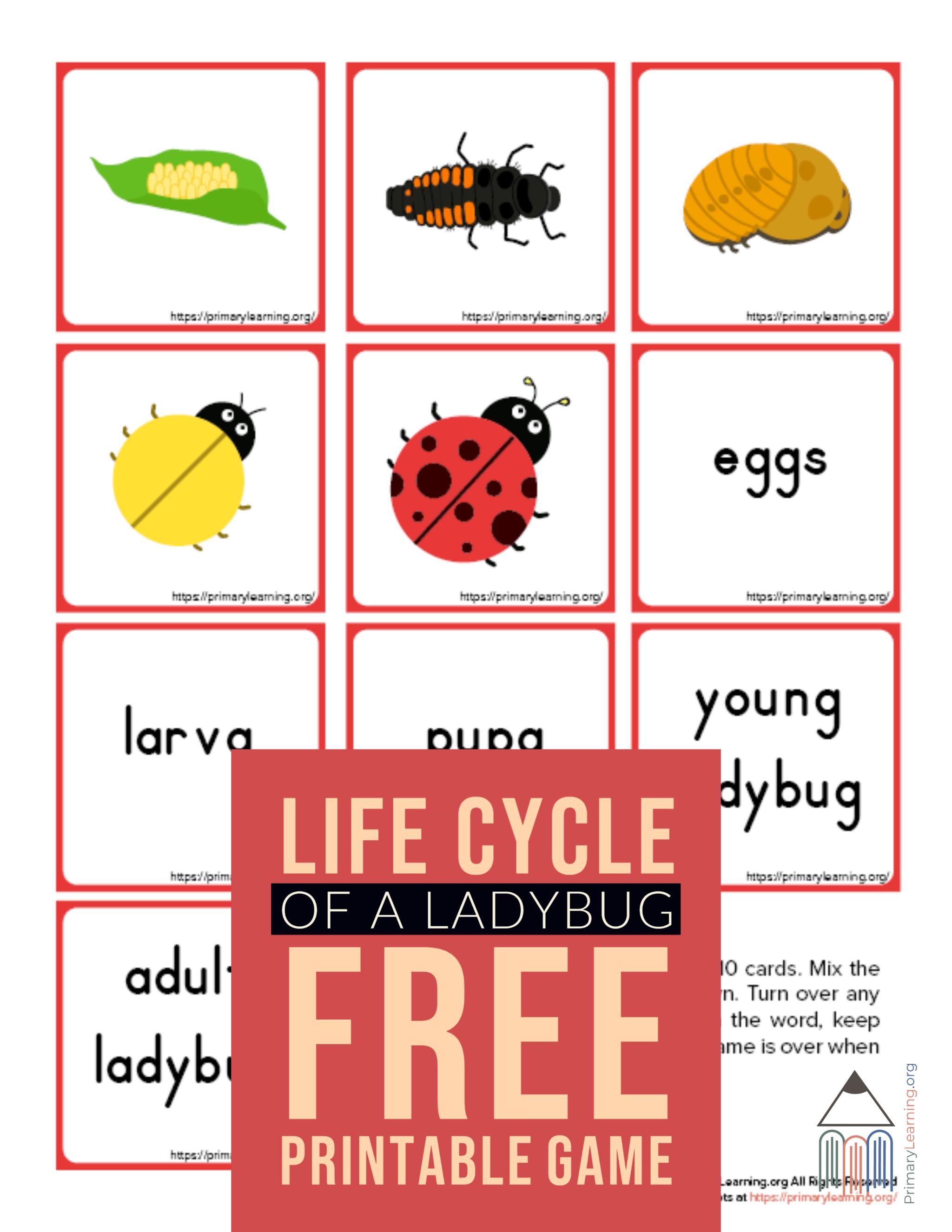 Ladybug Life Cycle Memory Game