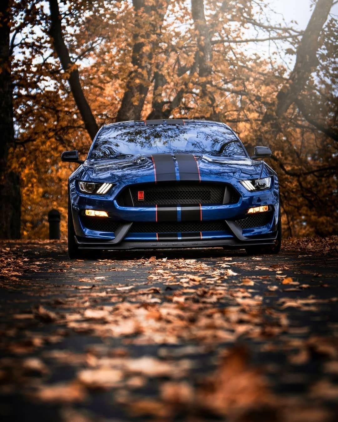 Mustang Gt500 Mustang Gt500 Ford Mustang Shelby Ford Mustang Car
