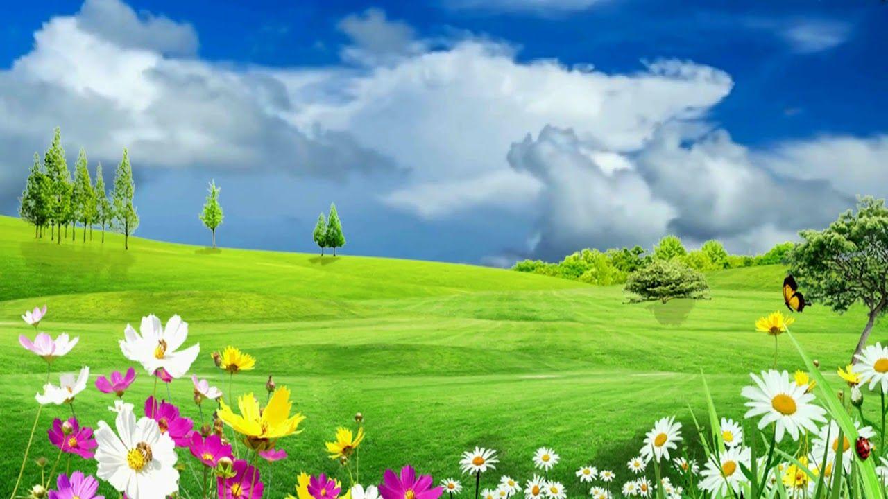 HD 1080p Meadow Flowers Garden Video, Royalty free