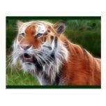 Tigers/n Postcard  Tigers/n Postcard  $1.00  by Sparktron   More Designs http://bit.ly/2g4mwV2 #zazzle