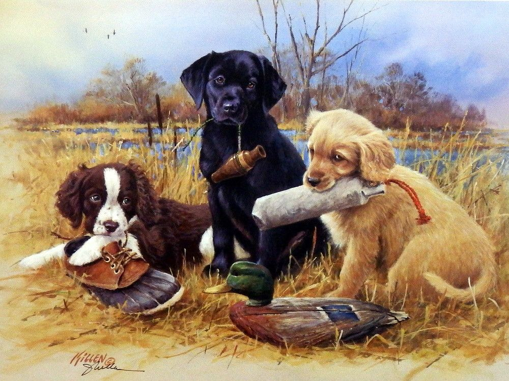 Artist James Killen Unframed Hunting Dog Puppy Print