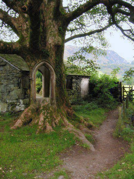 Treeportal, Ireland