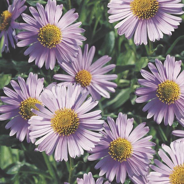 Ideas How To Plants Perennials Flowers