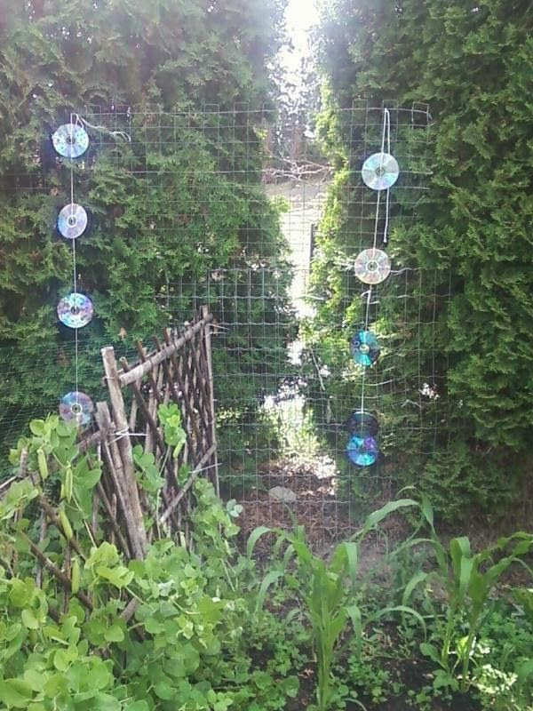 Great Funky Frugal Mommy: Keep Birds Out Of Your Garden!