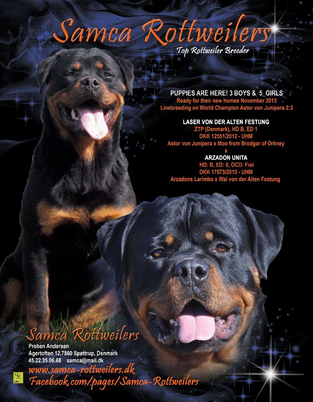 Puppies Are Here 3 Boys 5 Girls Samca Rottweilers Preben