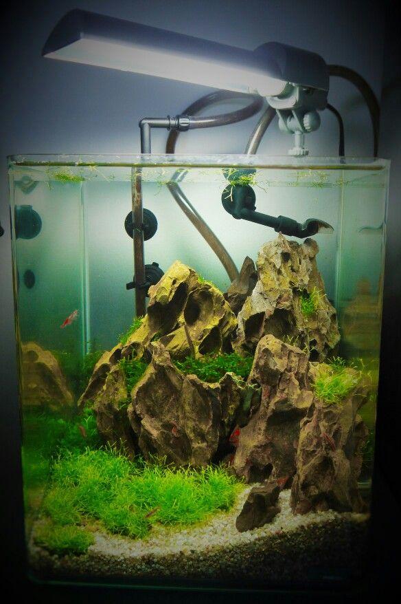 le baou nano tank dennerle 20l low tech aquascaping nano tank setup tag pinterest. Black Bedroom Furniture Sets. Home Design Ideas