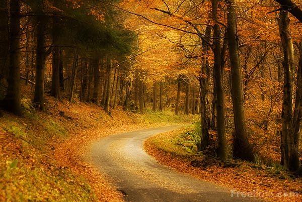 Amazing autumn road leading somewhere magical... #autumn