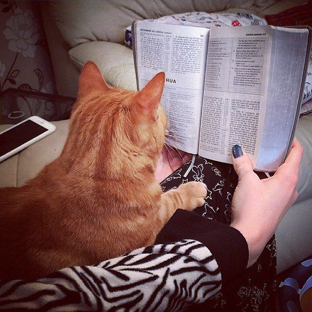 Библия 2017   VK   books   Cats, Reading time a Books