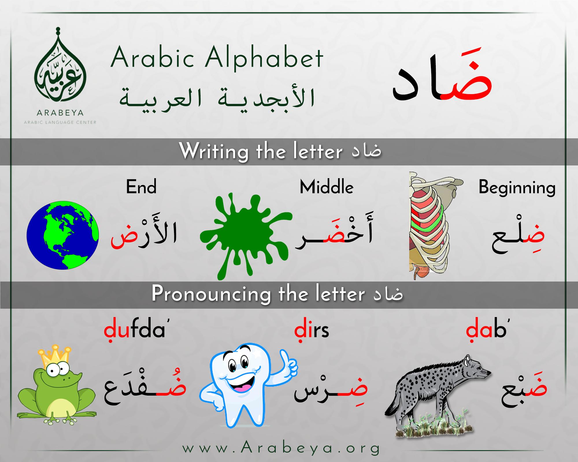 The Letter Daad حرف الضاد Learning Arabic Arabic Language