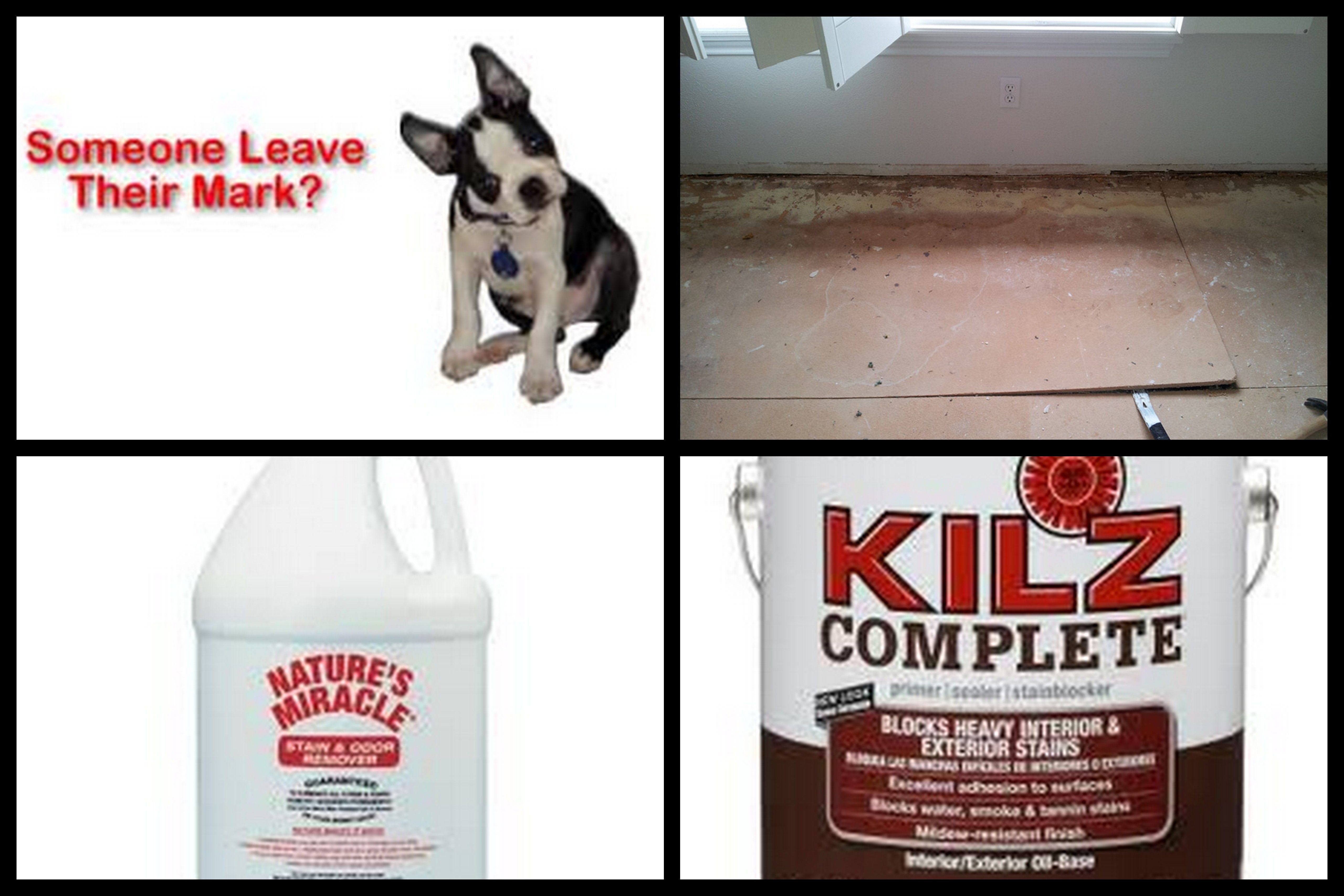 Pin By Kc Train On Helpful Tips Household Helpers Kilz Pet Odors