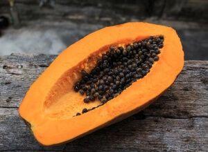 Papaya-Kerne, die entgifter.