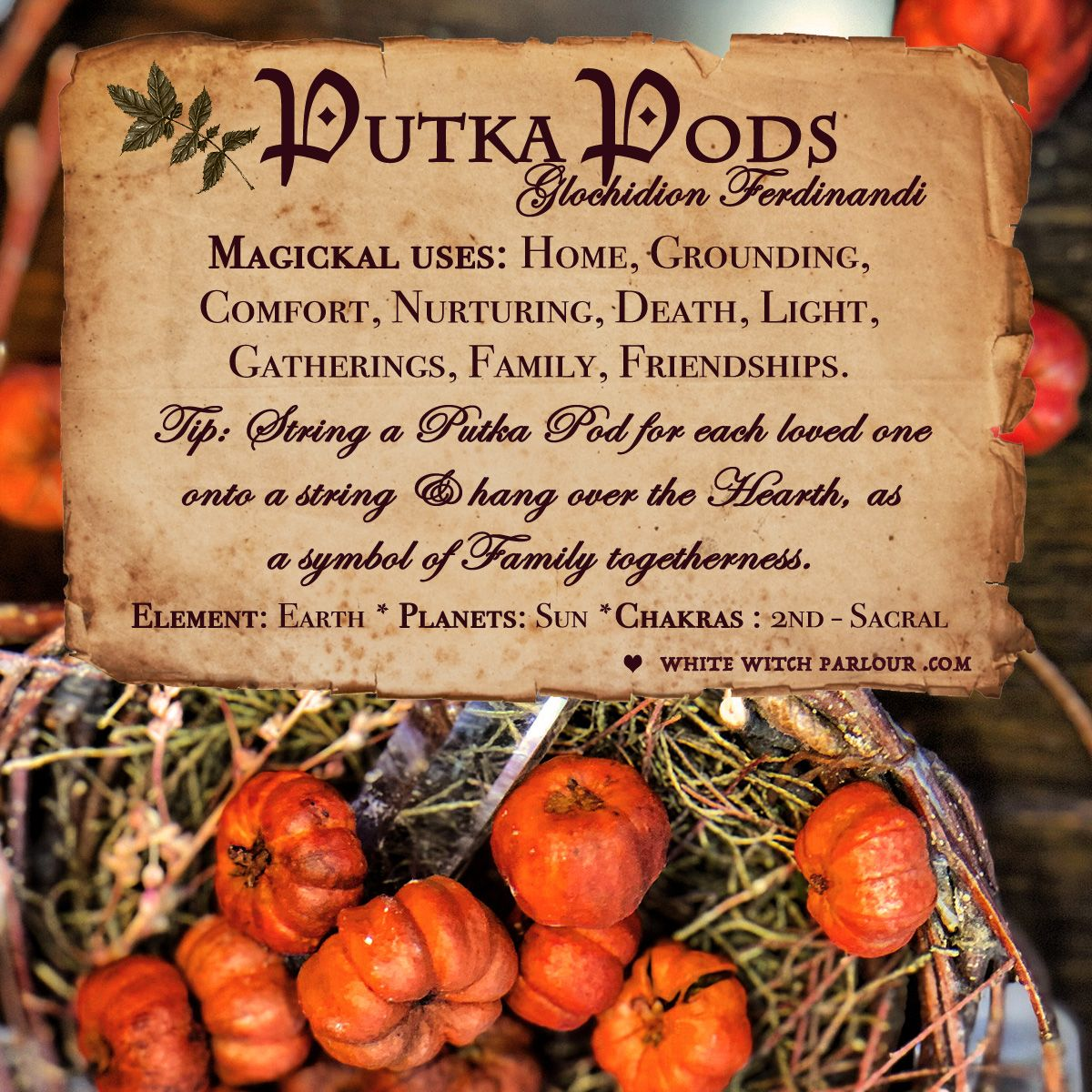 Putka Pods Apothecary Dried Herbs For Warmth Comfort Family Togetherness Drying Herbs Witch Herbs Magic Herbs
