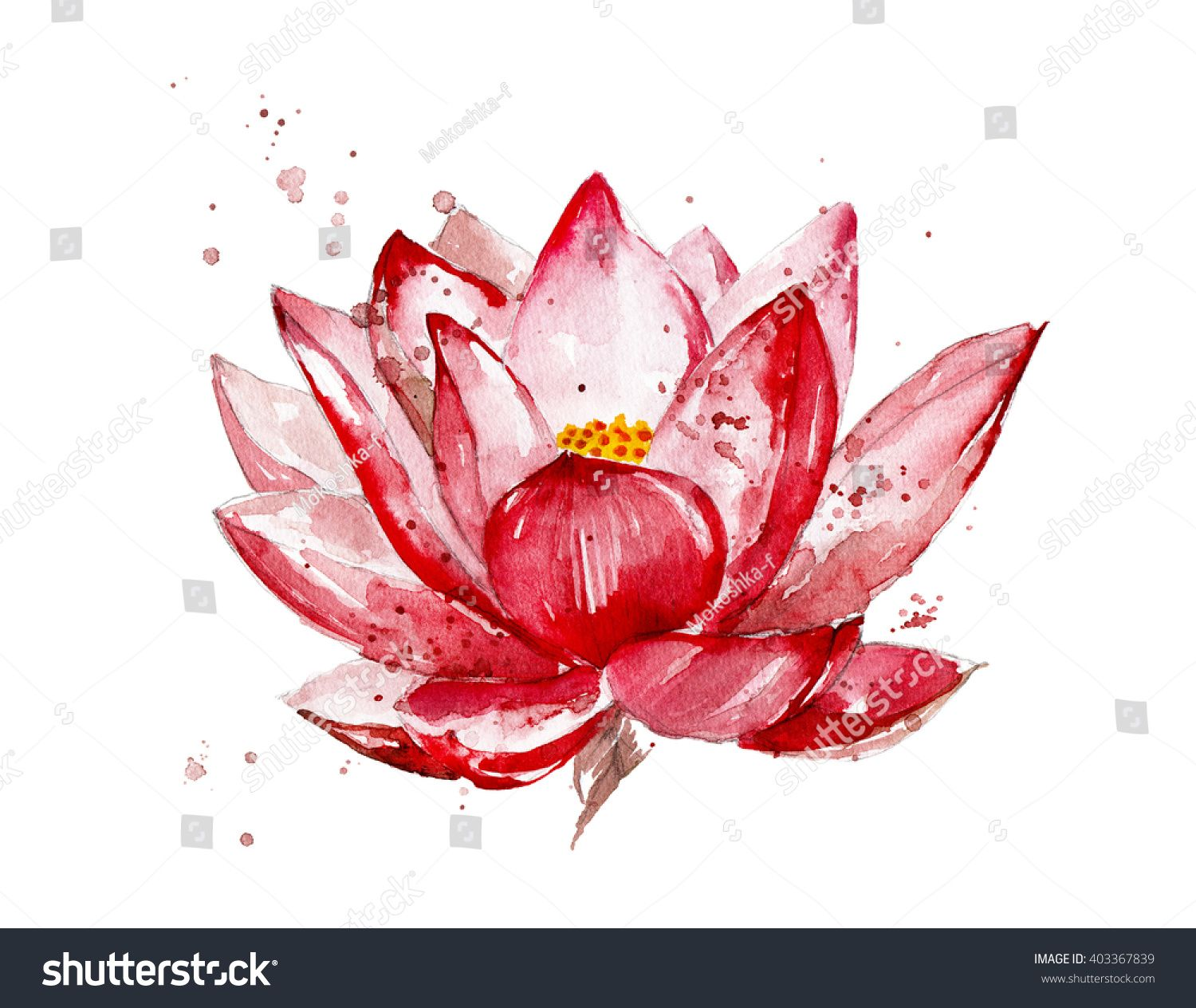 Pink Lotus Watercolor Illustration Isolated On White Background