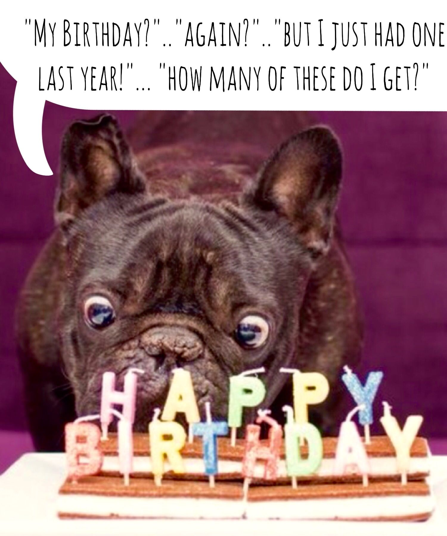 French Bulldog Birthday Bulldog Happy Birthday Cute Happy
