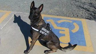 Mobile Service Dog Task Training Youtube Service Dog Training