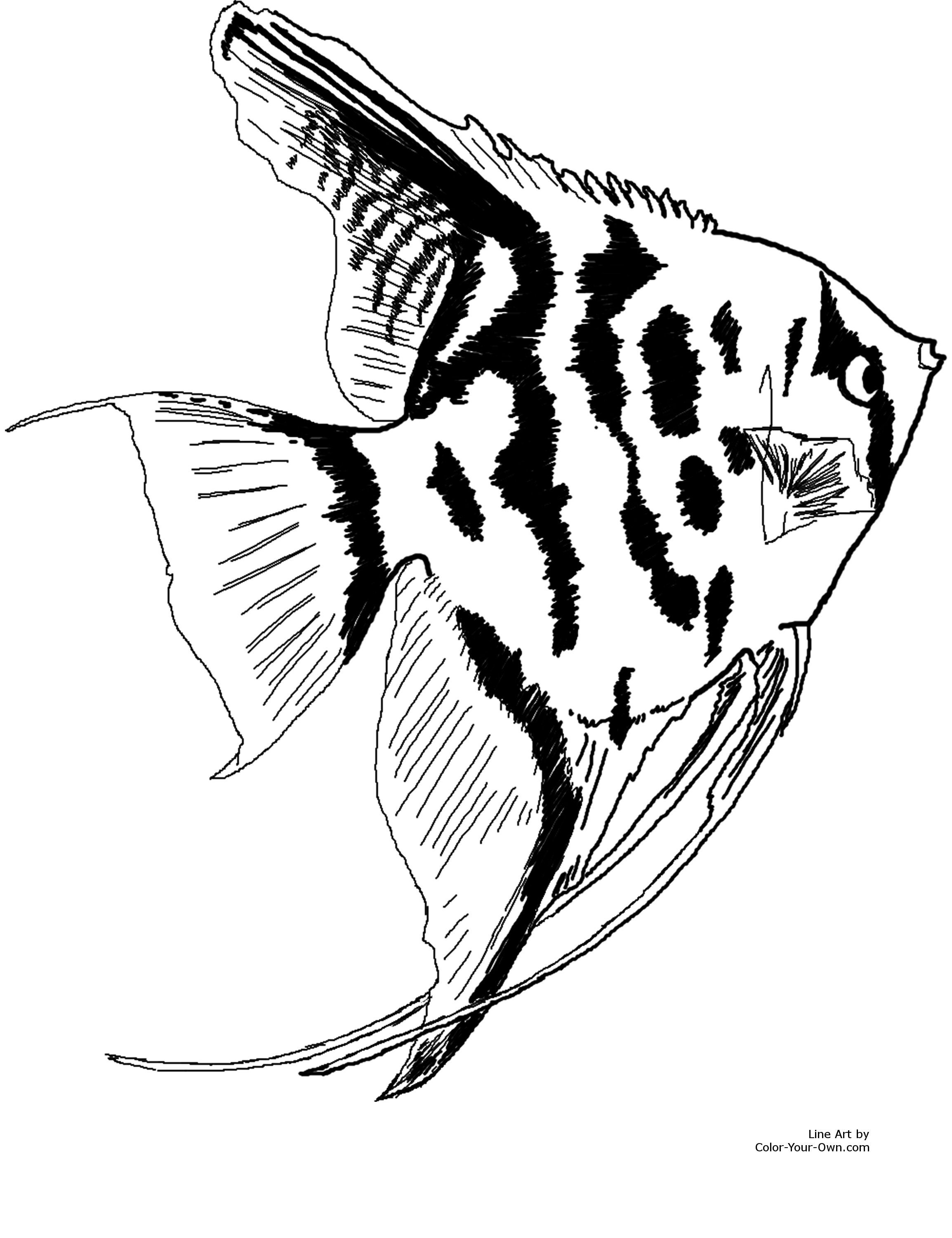 6 pics of angelfish coloring pages free printable angel