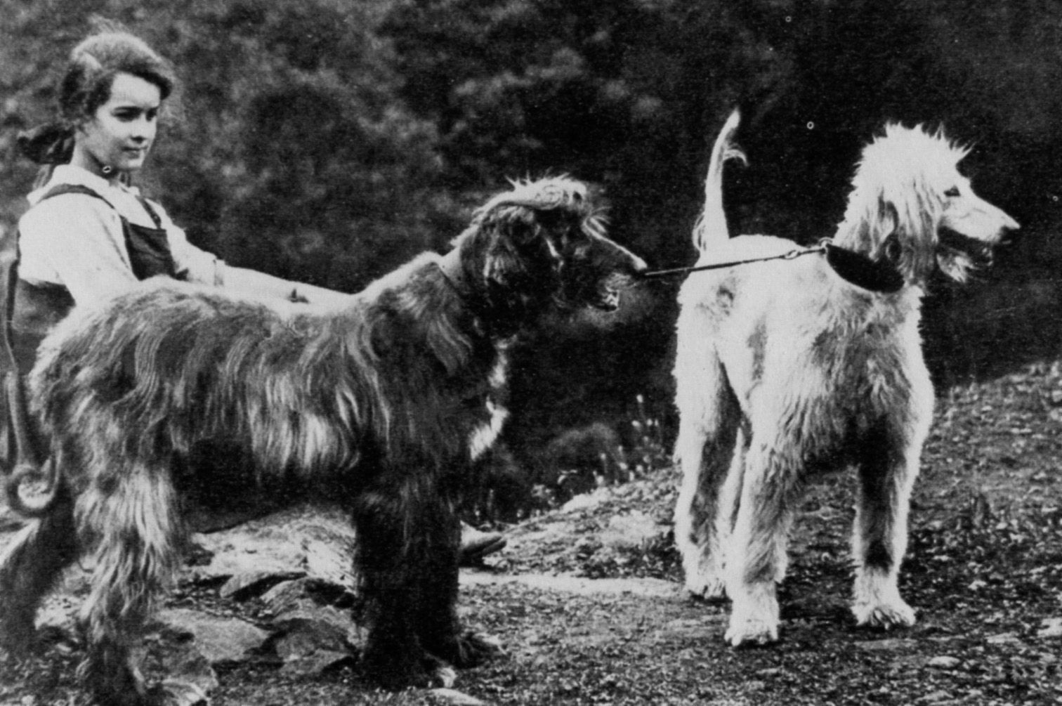 Old Black And White Photography Old Black And White Afghan Hound Photo And Wallpaper Beautiful Old Afghan Hound Hound Dog People
