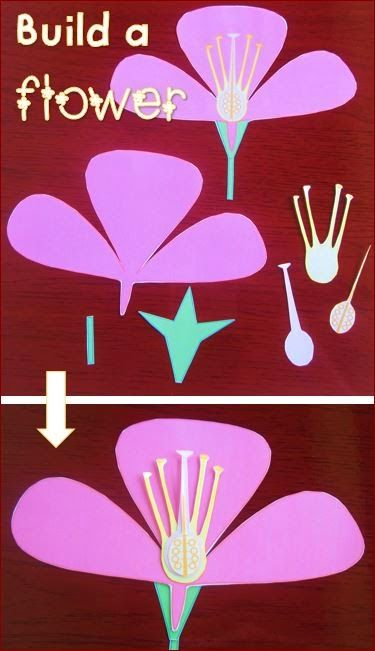 Parts of a flower activities worksheets flash cards Teach me how to draw a flower