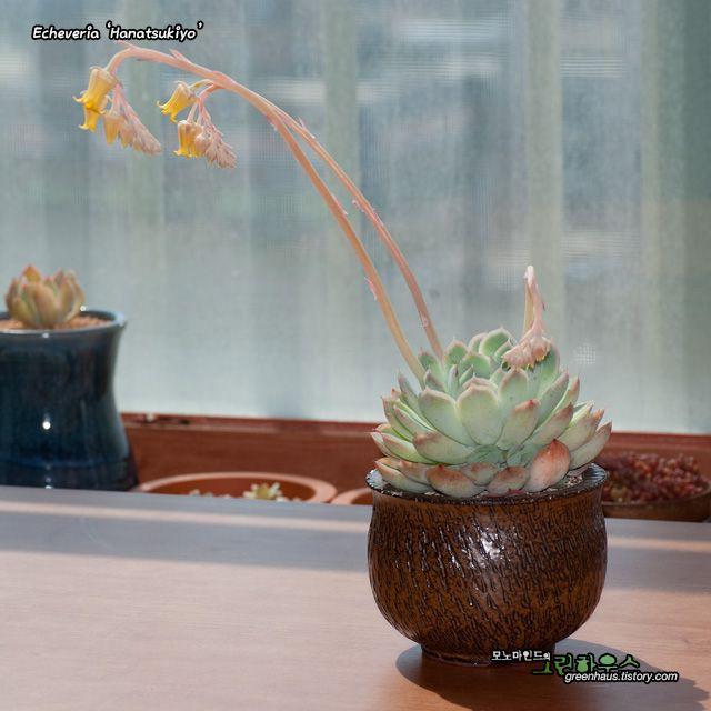 monomind's greenhouse ::