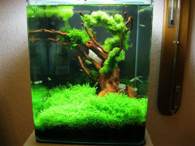 Such a cool nano setup aquarium happiness pinterest for Aquarium nano cube