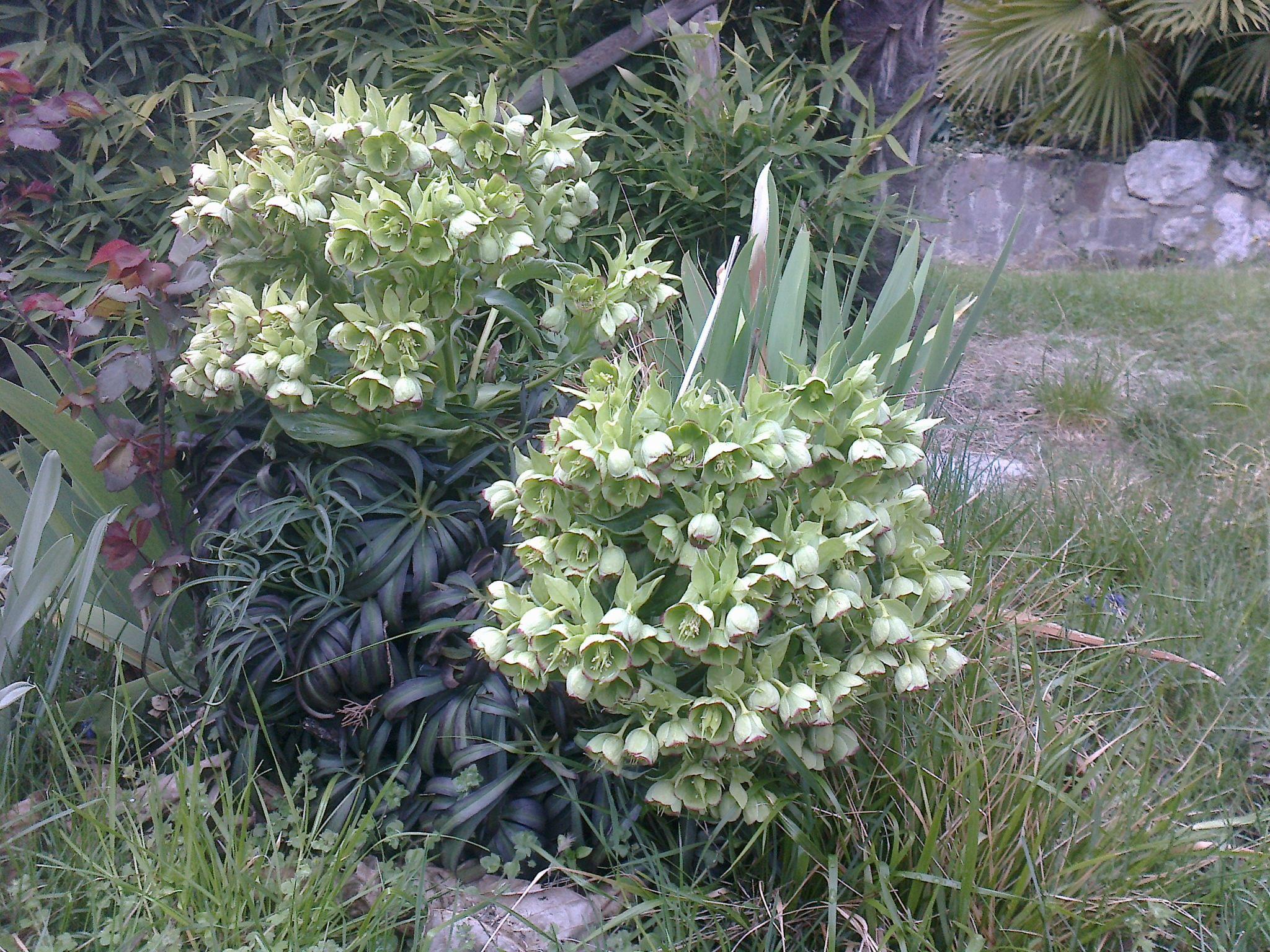fioritura inaspettata