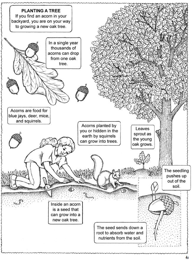 My First Book About Backyard Nature Ecology for Kids! Coloring