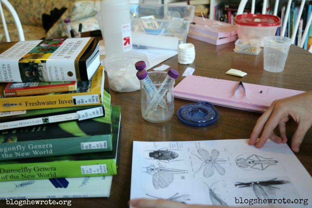 Art nature study with beatrix potter nature art
