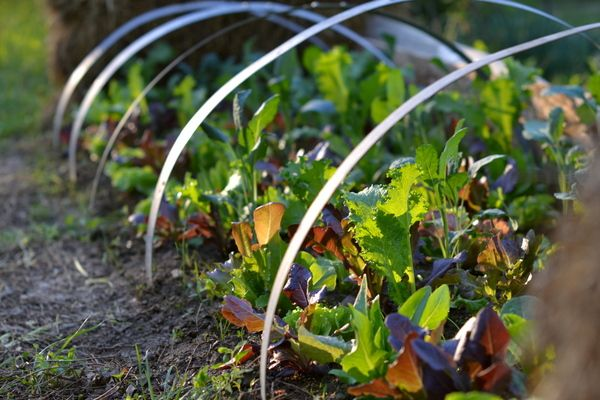 greens garden at the golden hour