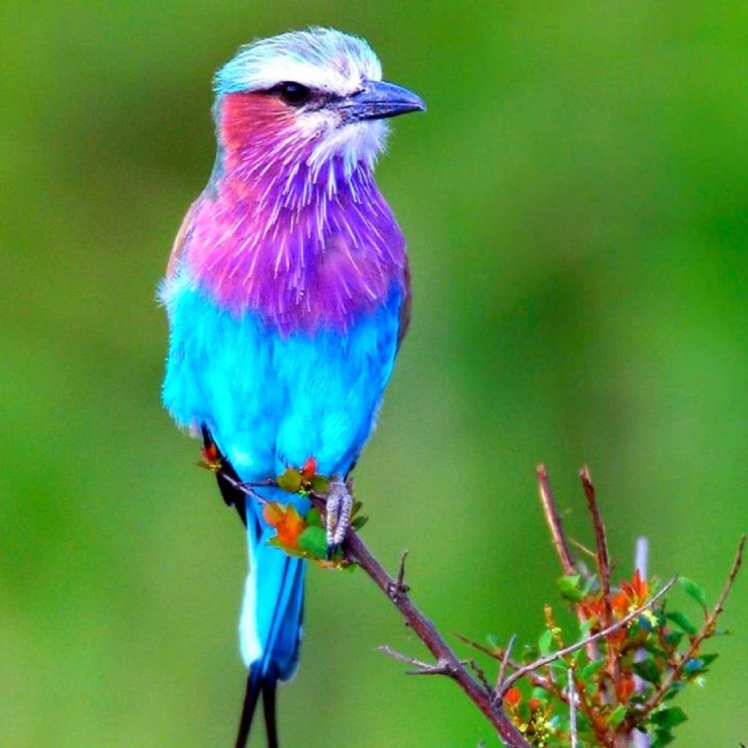 Really pretty bird... Beautiful bird wallpaper