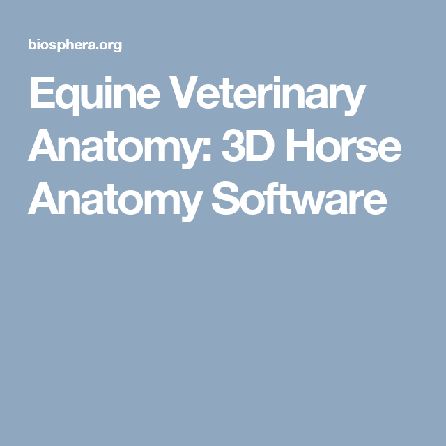 3D Horse Anatomy Software | Horse anatomy and Horse
