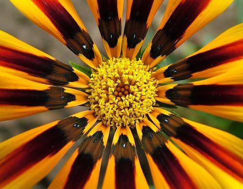 symmetrical balance photography google search symmetry asmmetry