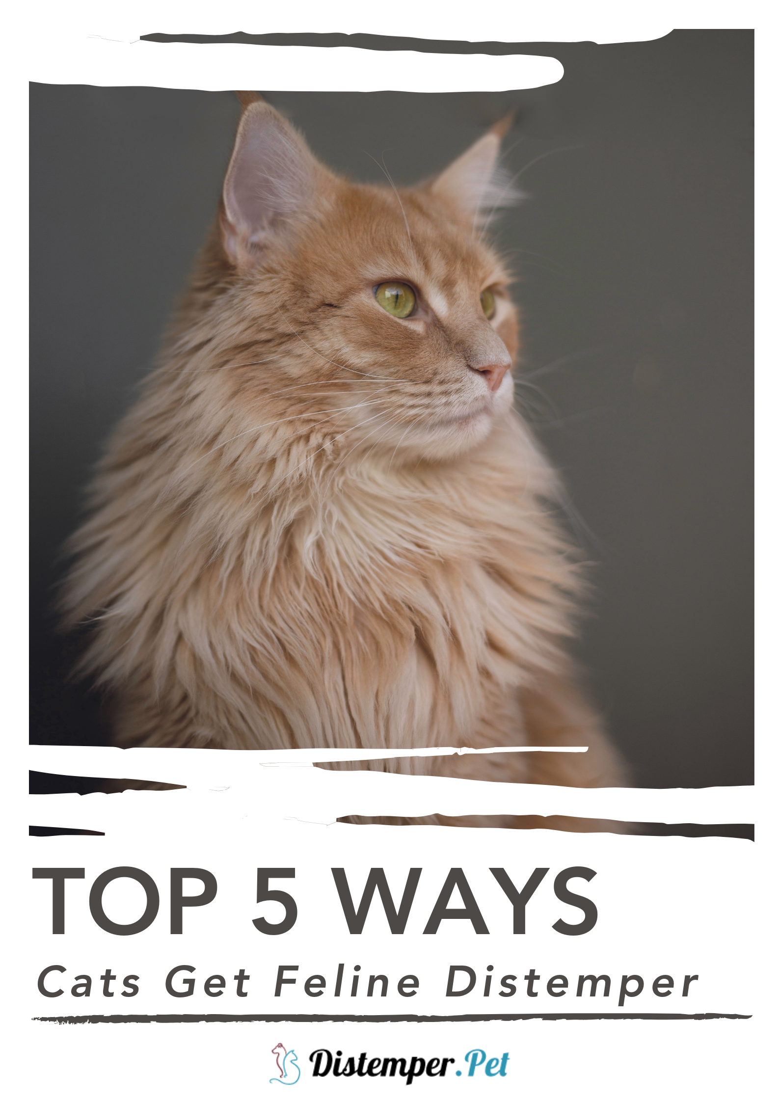 5 Ways Cats Get Feline Distemper Feline distemper, Cats