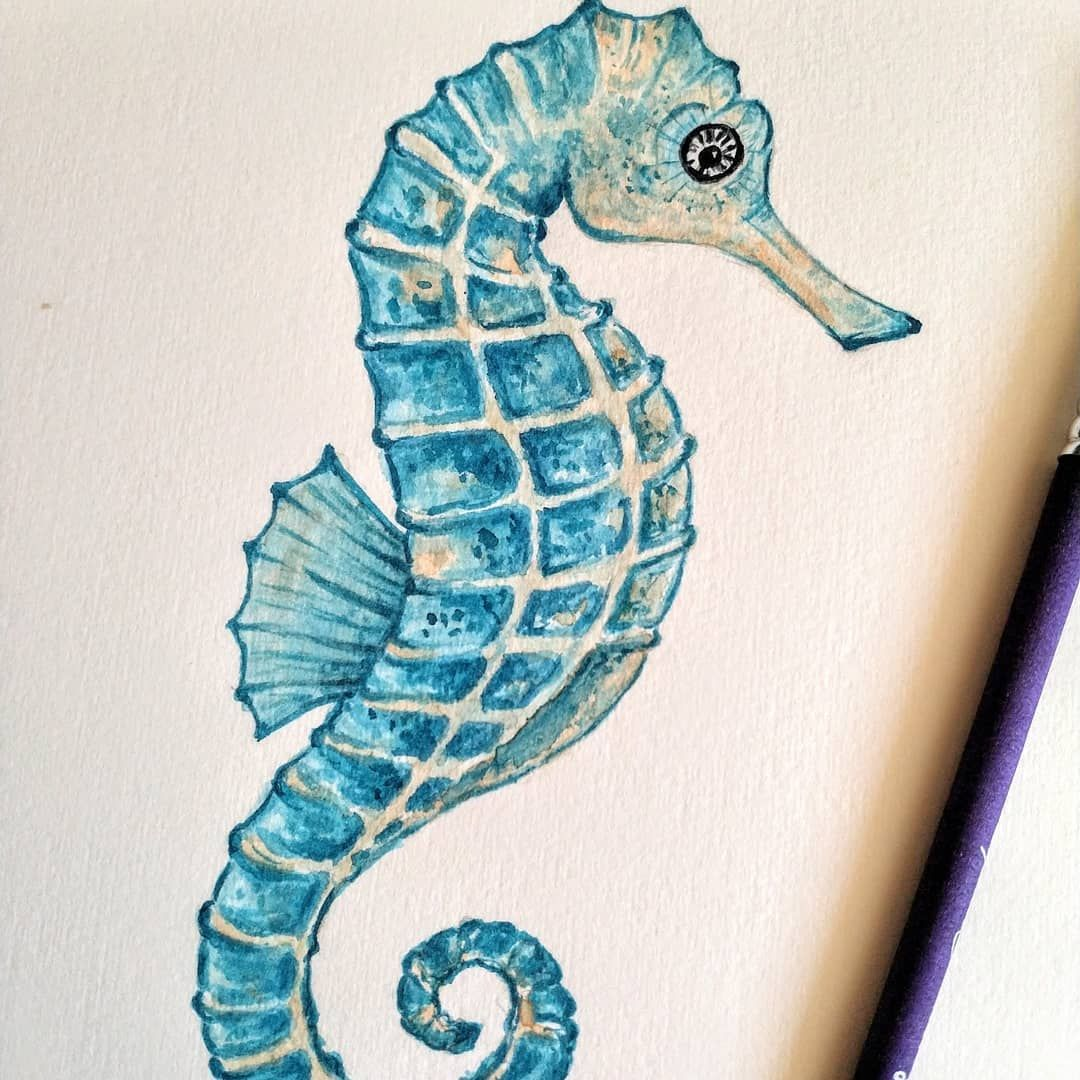 Torquoise Seahorse Seahorse Artwork Seahorse Drawing Seahorse Art