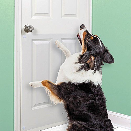Best How Do I Get My Dog Stop Scratching The Door Image Collection