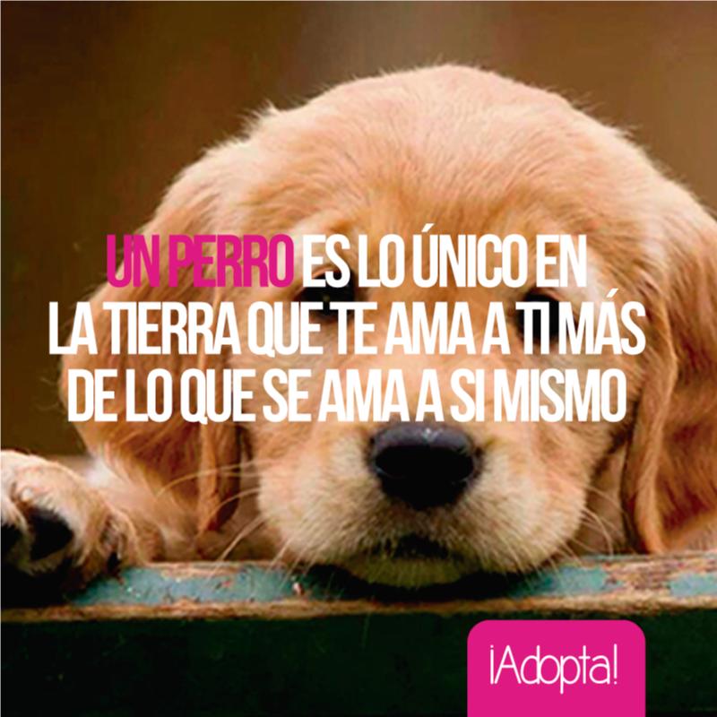 Perro Frase Frases Amor Adopción Perros Frases Perros