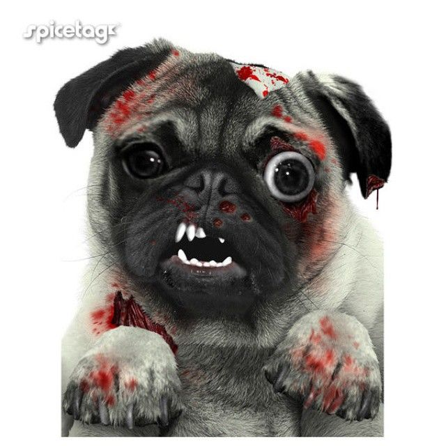 Our Zombie Pug Tshirt Is Still Cute Spicetag On Instagram Pugs